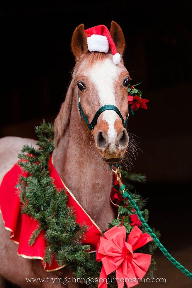 FCER Christmas 2015-21_web
